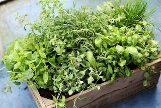 How to start herb farm from home